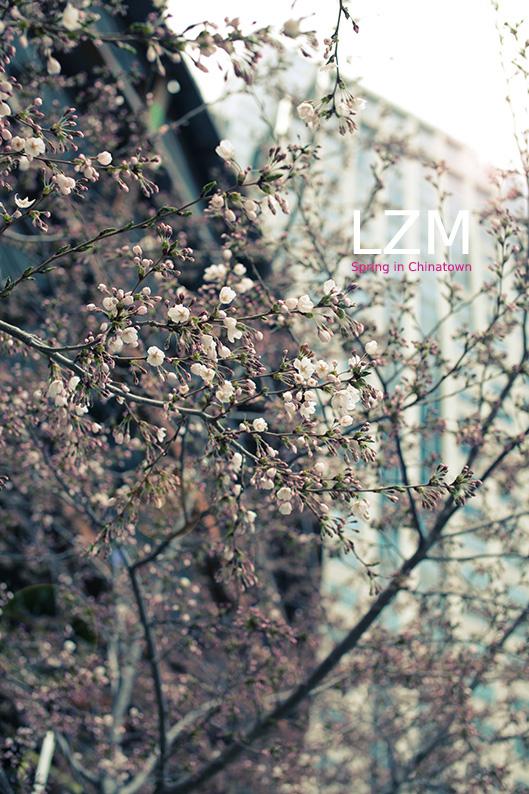 spring9