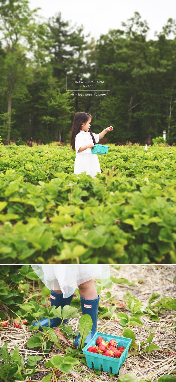 Strawberry Farm by Le Zoe Musings
