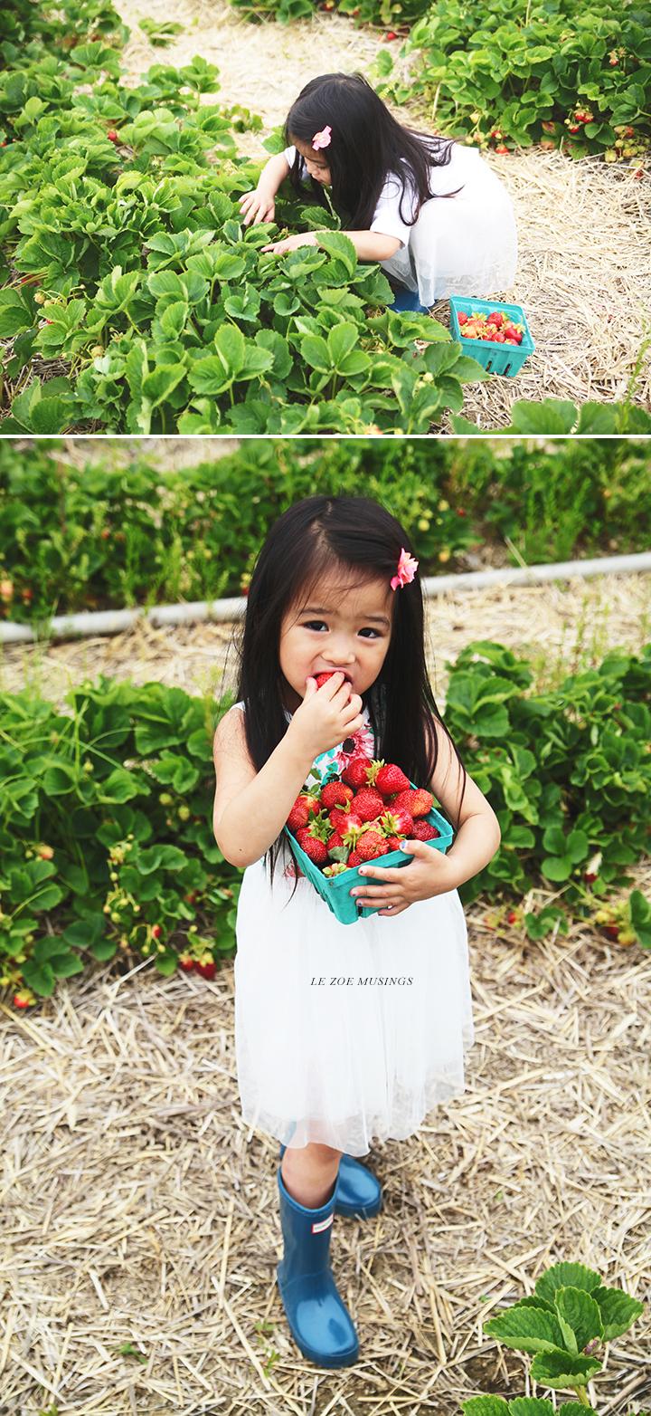 Strawberry Farm by Le Zoe Musings2
