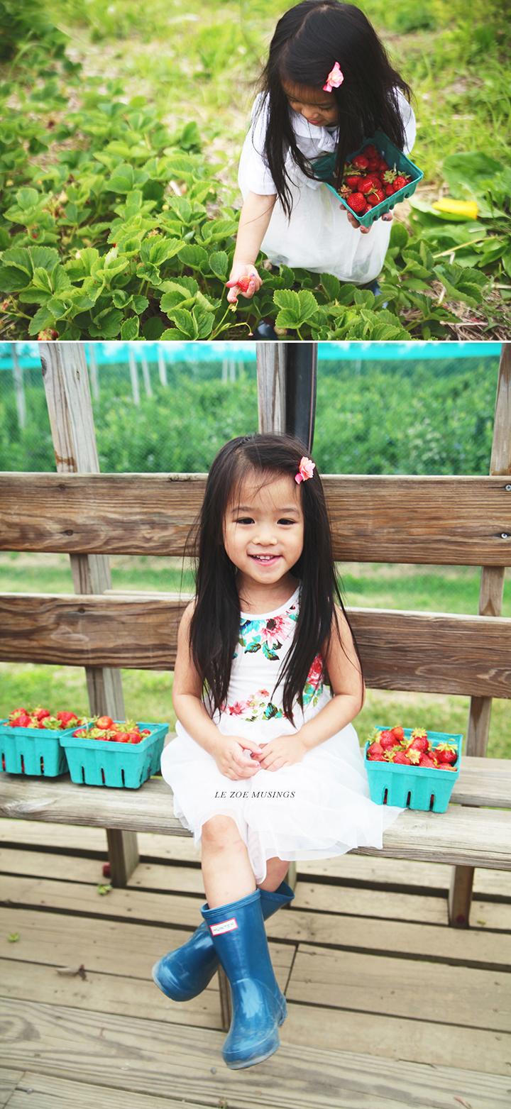 Strawberry Farm by Le Zoe Musings4
