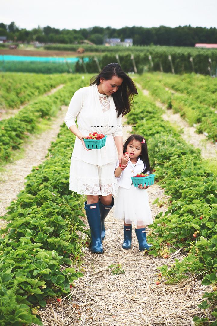 Strawberry Farm by Le Zoe Musings8