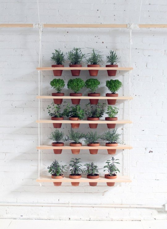 Indoor Plants3