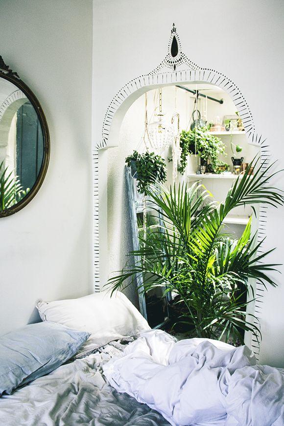 Indoor Plants4