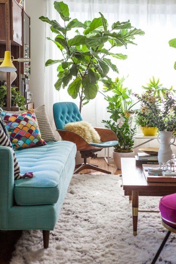 Indoor Plants5
