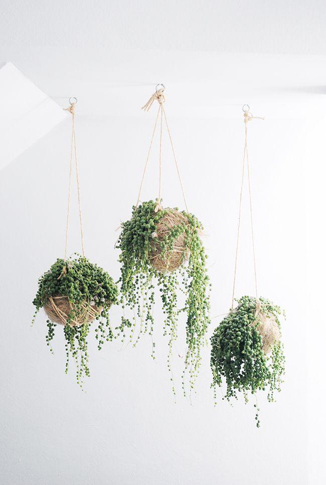 Indoor Plants6