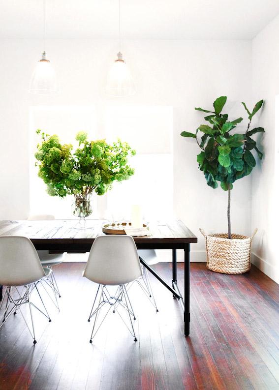 Indoor Plants9