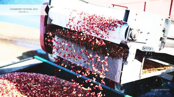 Cranberry Festival _Le Zoe Musings_bANNER