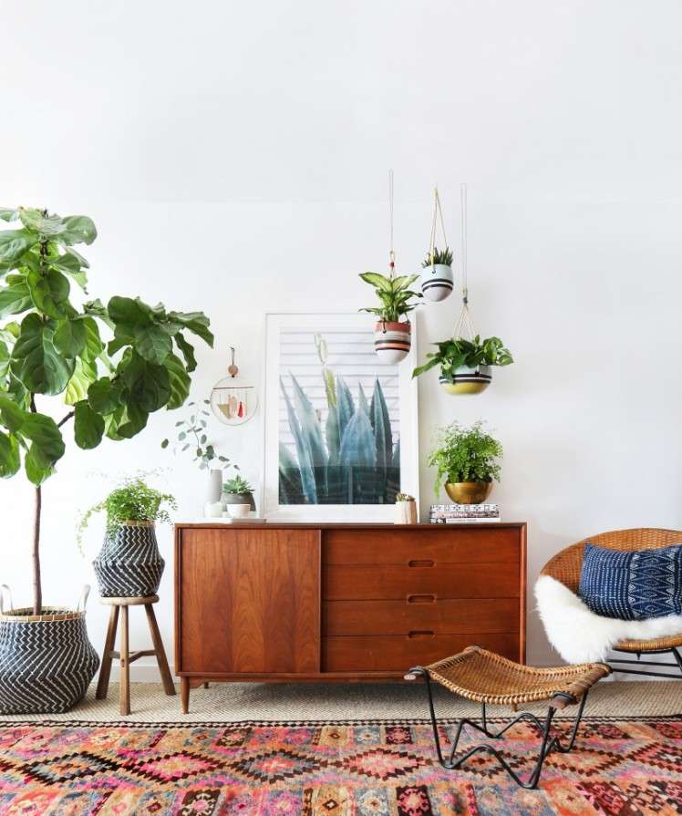 Fiddle Leaf Fig10