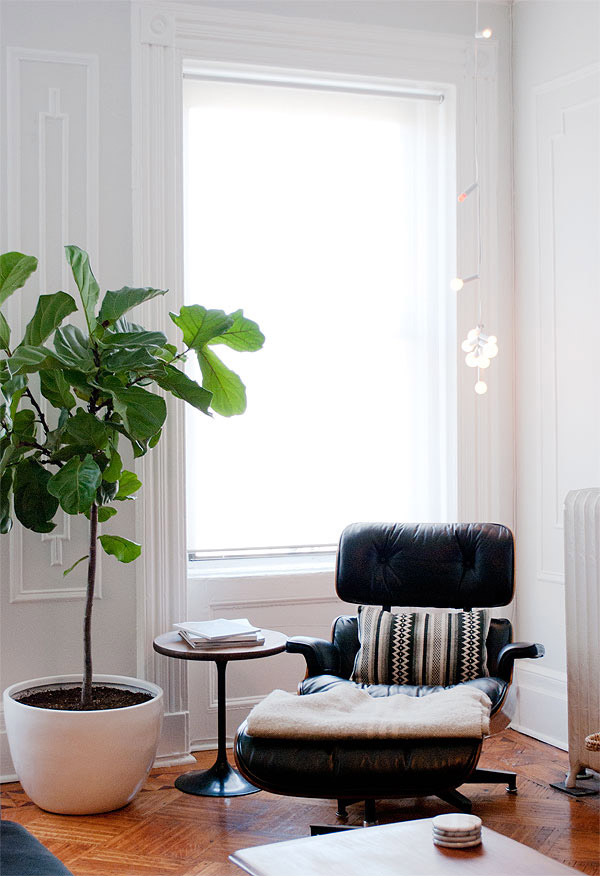 Fiddle Leaf Fig5