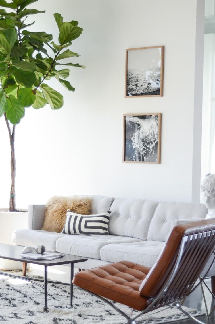 Fiddle Leaf Fig7
