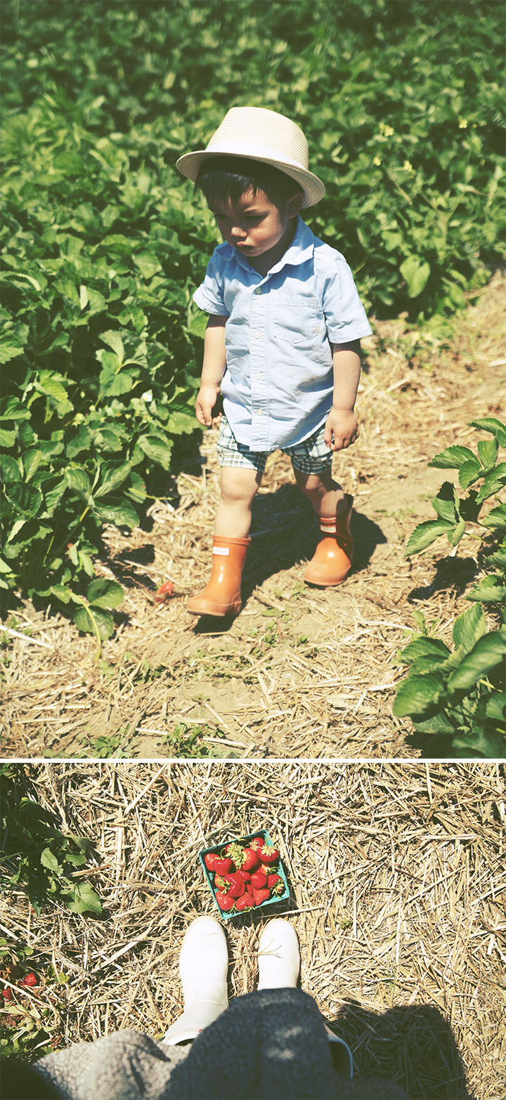 Father's Day Strawberry Picking2 by Le Zoe Musings