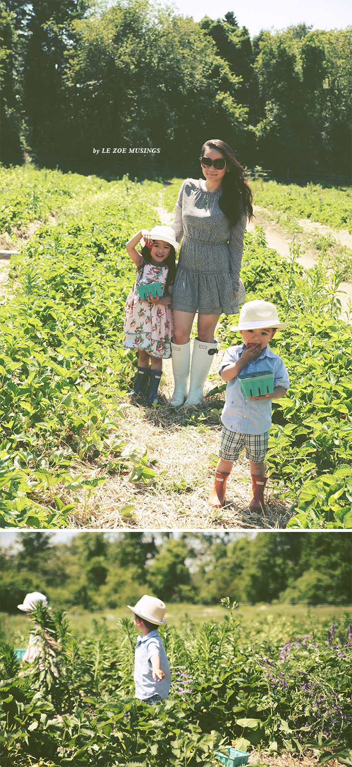 Father's Day Strawberry Picking4 by Le Zoe Musings
