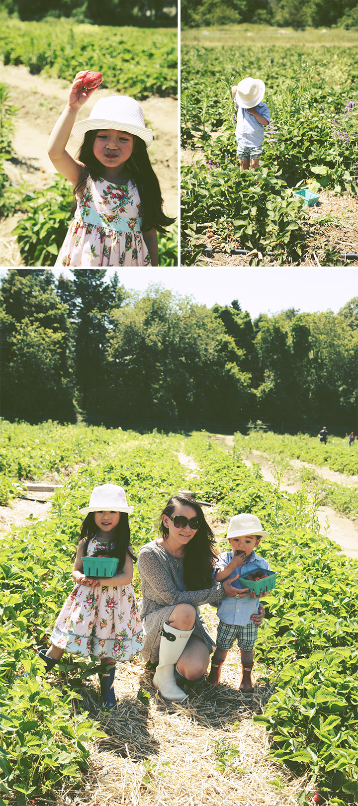 Father's Day Strawberry Picking5 by Le Zoe Musings
