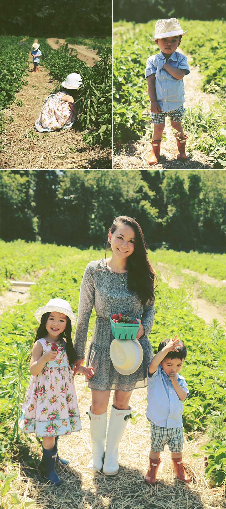 Father's Day Strawberry Picking6 by Le Zoe Musings