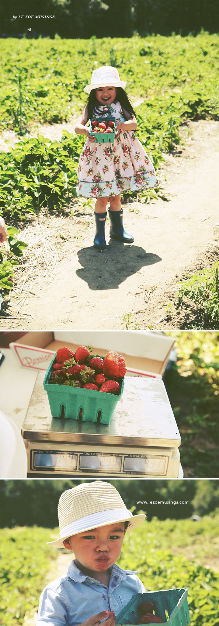 Father's Day Strawberry Picking7 by Le Zoe Musings
