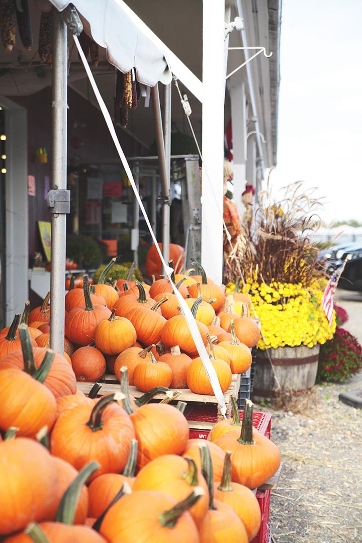 pumpkin-patch-10
