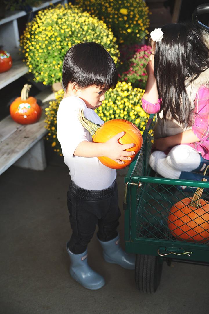 pumpkin-patch-24