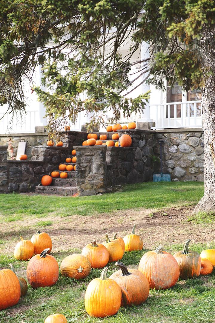 pumpkin-patch6