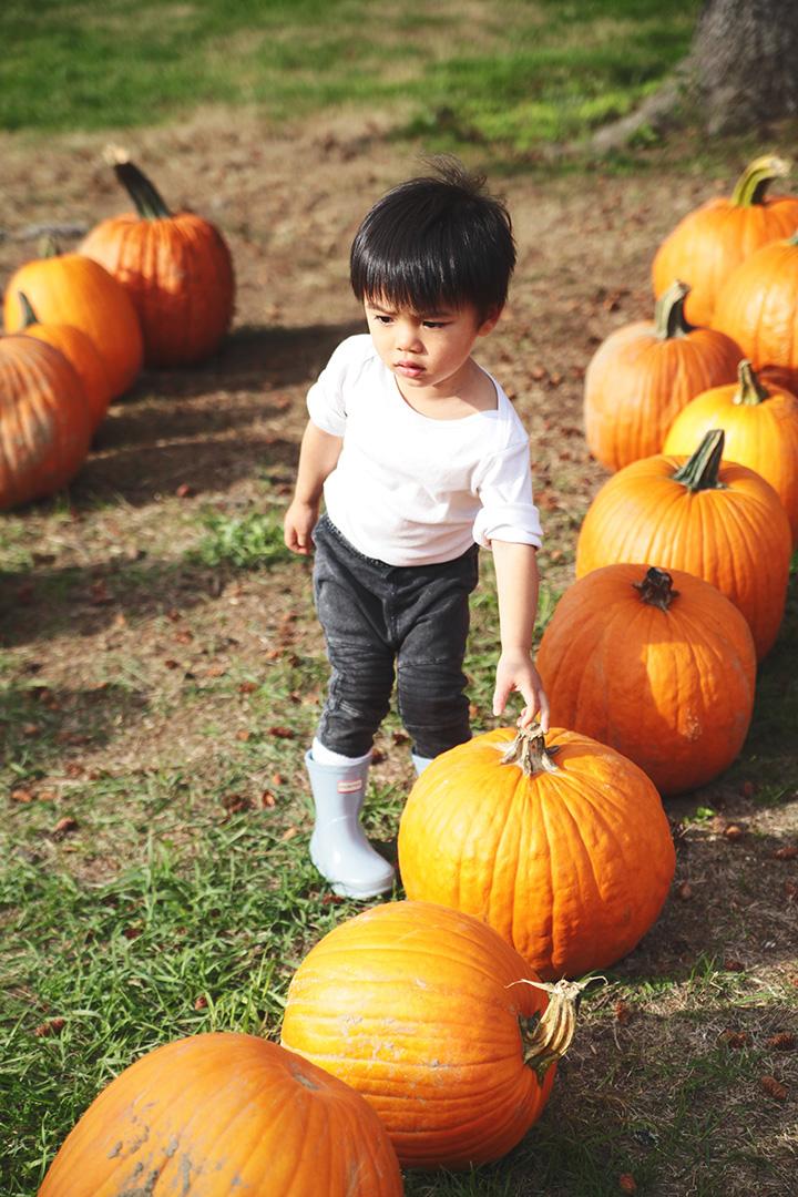 pumpkin-patch8