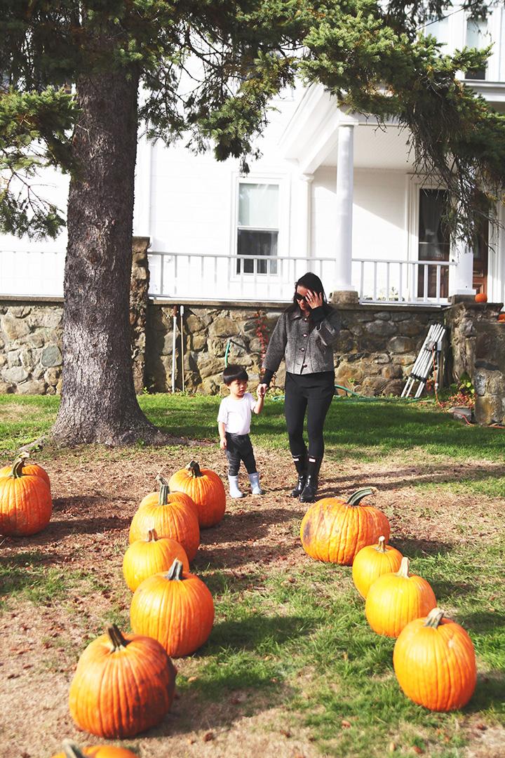 pumpkin-patch9
